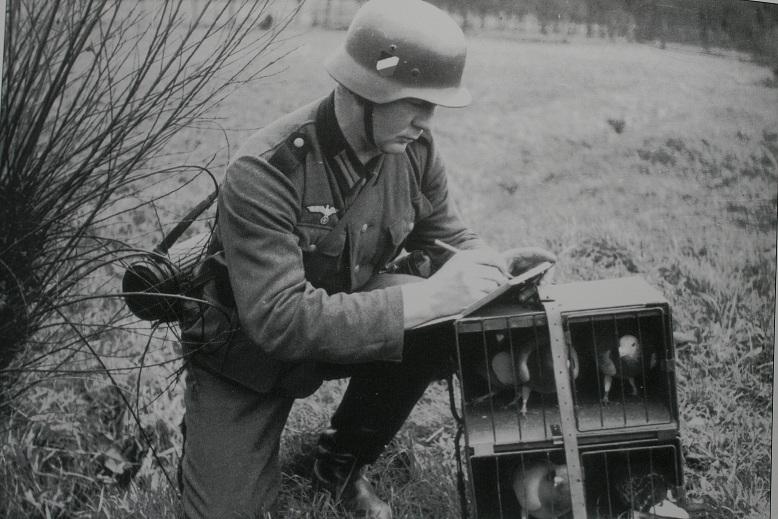 Duitse soldaat aan het Russische front met duiven