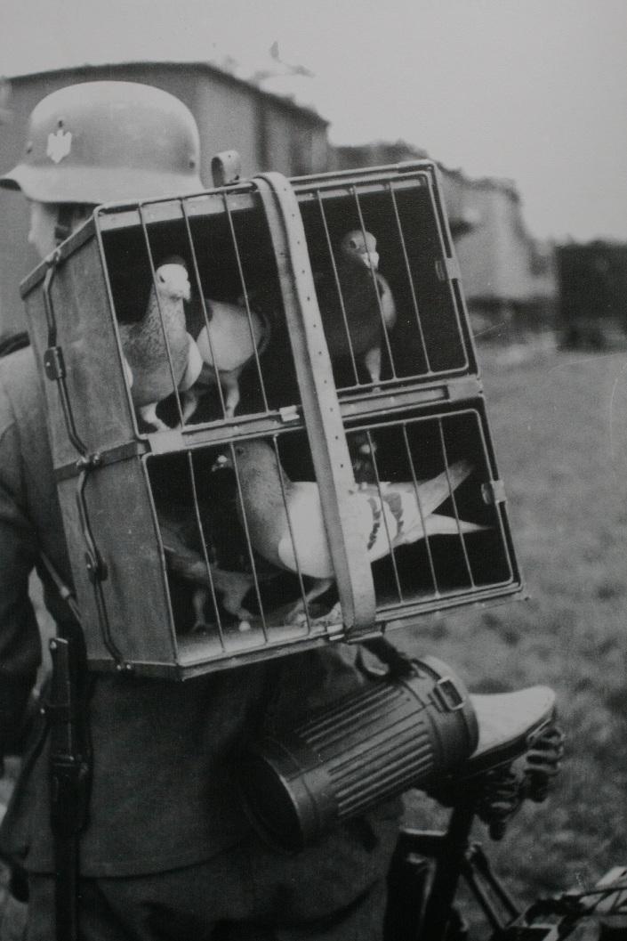 Duitse soldaat op fiets en duiven