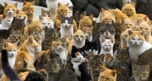 katten japan