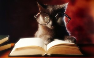 HSS Wise Cat with Glasses Reading Book