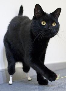 Oscar de bionische kat