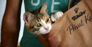 cat-986323_640-640x330
