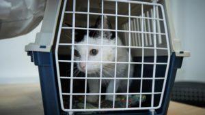 dierenasiels-amsterdam-en-haag-waarschuwen-kattenziekte