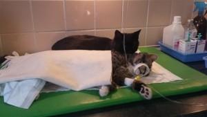 poes wast zieke kat