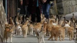 katten eiland japan