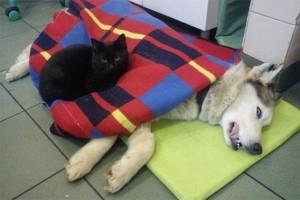 poes waakt over zieke hond