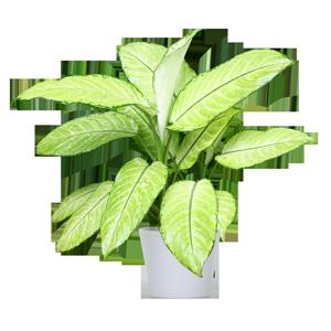 giftige kamerplant dieffenbachia