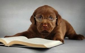 hond met boek en bril
