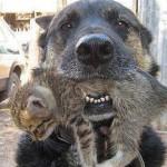 hond-redt-kitten-uit-brandend-appartementencomplex