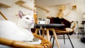 katten cafe