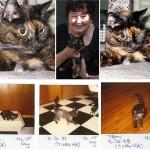 oudste kat ter wereld