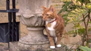De nieuwe huiskat op Chartwell is inmiddels de zesde in de dynastie en is dan ook Jock VI gedoopt.