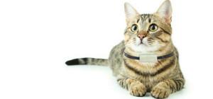 Kat met Pack Cats van Weenect