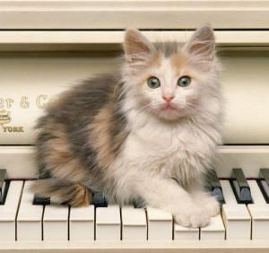 poes muziek