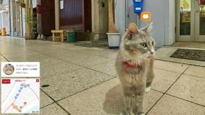 media_xll_7980930'Cat Street View': ontdek de wereld door de ogen van een kat