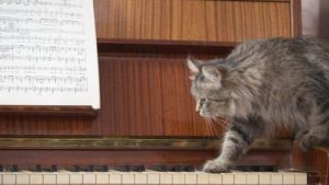 A piano with a sheet of music and a cat stepping onto the piano keys