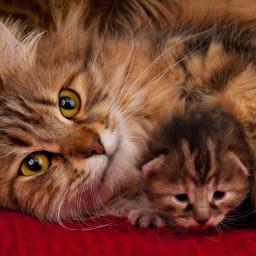 modetijdschrift-speciaal-voor-kattenliefhebbers-gelanceerd