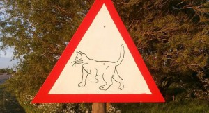 nieuw-verkeersbord-in-zwaagdijk-waarschuwt-voor-overstekende-katten-