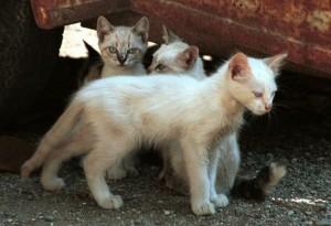 katten dakloos