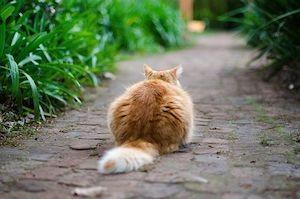 piepvandaag-kat-achterkant