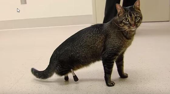 Katten In Het Nieuws Platform Verantwoord Huisdierenbezit