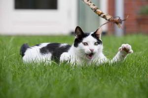 piepvandaag-kat-spelen