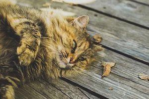 piepvandaag-luierende-kat1
