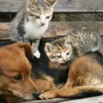 kat en hond,