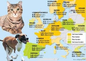 de ruwe populatie huisdieren in 54 landen met voorkeur voor honden of voor katten