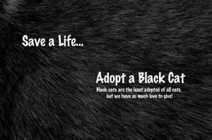 zwarte kat dag van de zwarte kat 17 augustus