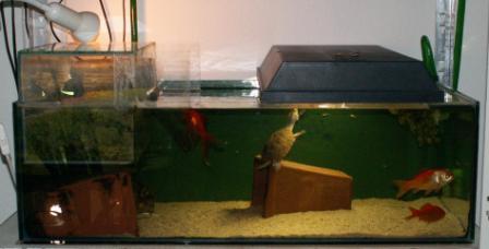 aquarium_sternotherus