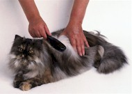 cat_brush