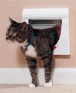 cat_door