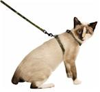 cat_lead