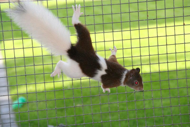 eekhoorn bonte lis jboeijen9