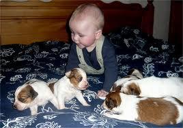 foto gedrag pup kind