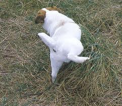 foto gedrag pups zindelijkheid 1