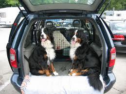 Berner sennenhonden vakantie auto