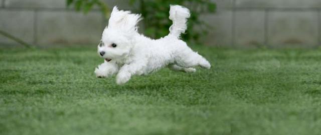 foto pup rennen 1