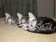 gedrag 3 kittens