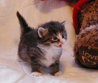 gedrag kitten