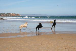 honden_strand