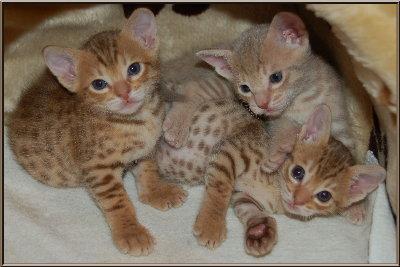 meulicats_kittens