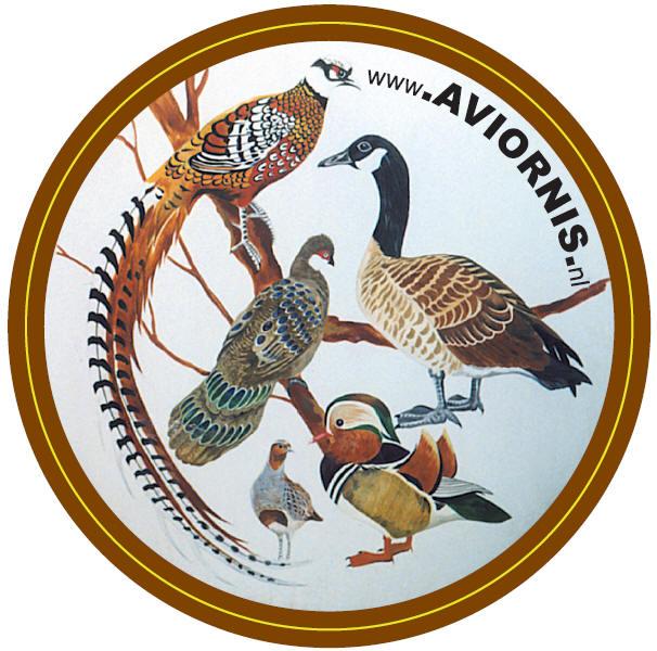 logo Aviornis