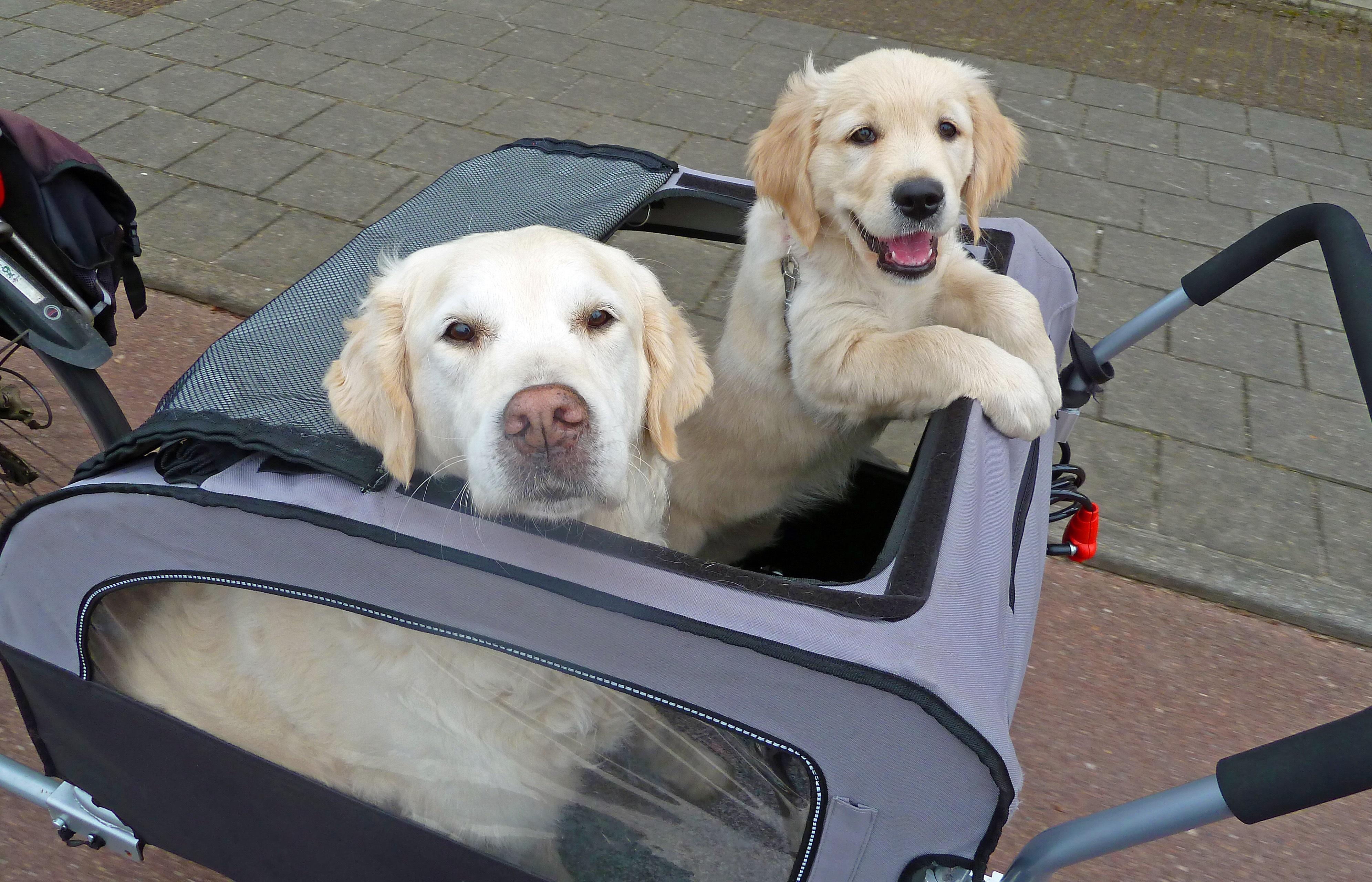 933b4350d09917 Er komt een pup in huis, hoe bereiden we ons goed voor? | Platform ...