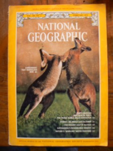 bibliotheek kangoeroe 003