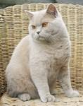 brit kat lilac lavendel