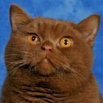 brit kat cinnamon