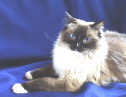 Zanadou portret 2001