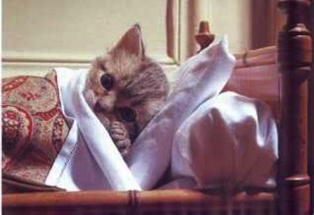 kat ziek